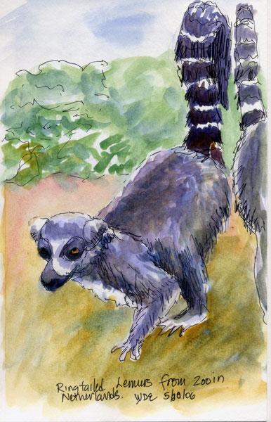 Lemur4-web.jpg