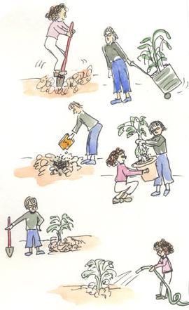 Hydrangea-cartoon