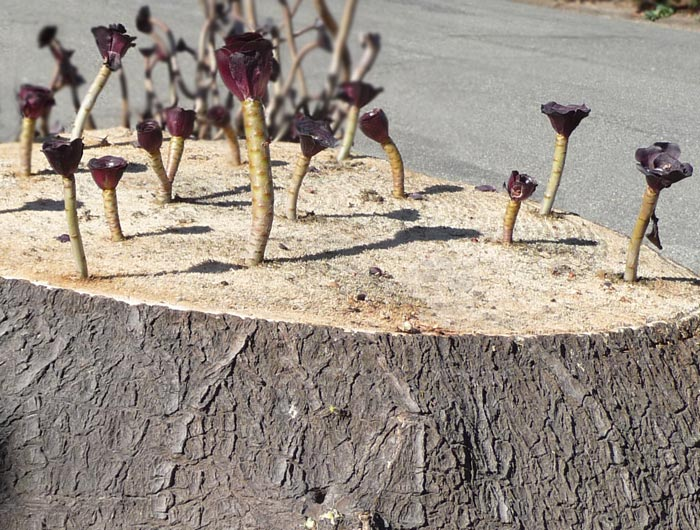 From a dead stump new growth sprouts