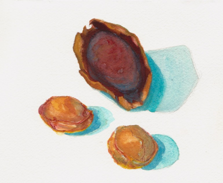 Avocado & Apricot Pits, Watercolor on coldpress paper, 6x8