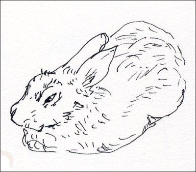 Ardenwood-Bunny