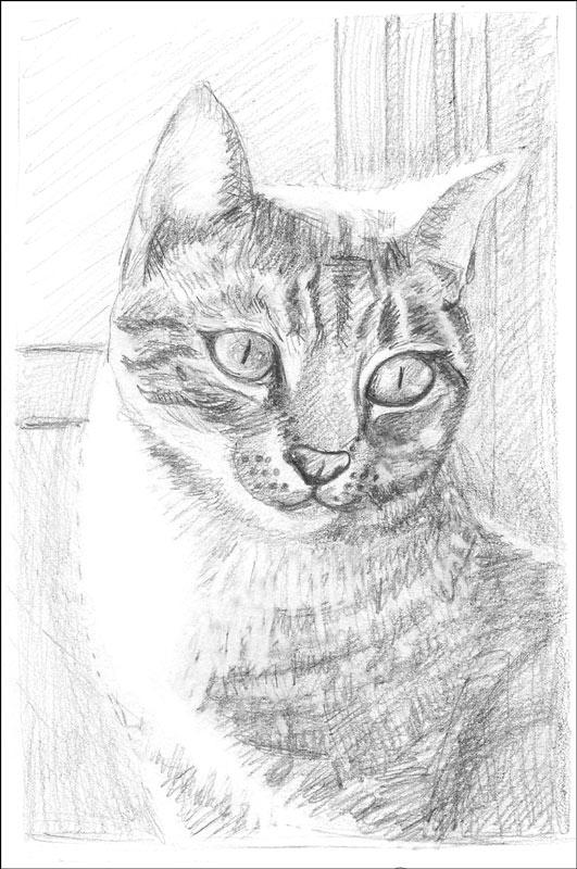 Buzz (Busby Berkeley), pencil sketch, 6×9 in