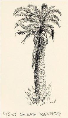 palm-sausalito