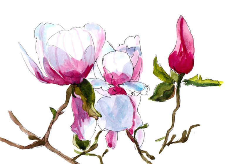 Magnolia Bloom, ink & watercolor wash