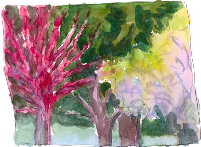 Spring Trees, ink & watercolor wash