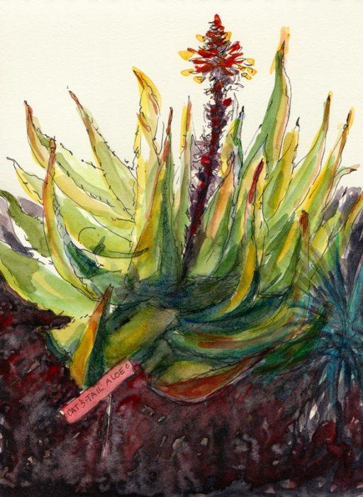 Cat-Tail Aloe, Ink & watercolor in sketchbook
