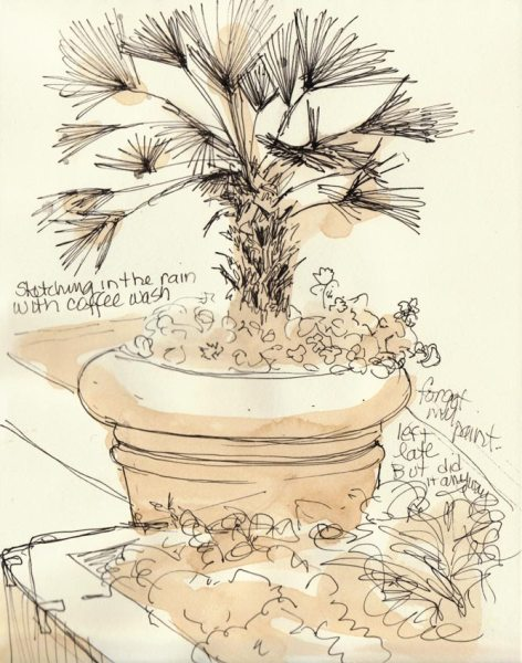 Potted Palm, Ink & coffee in sketchbook, 8x6""