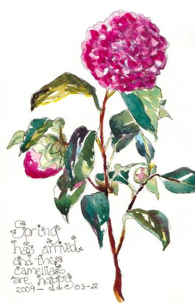 """Happy Spring Camellia, Ink & watercolor, 7x5"""""""
