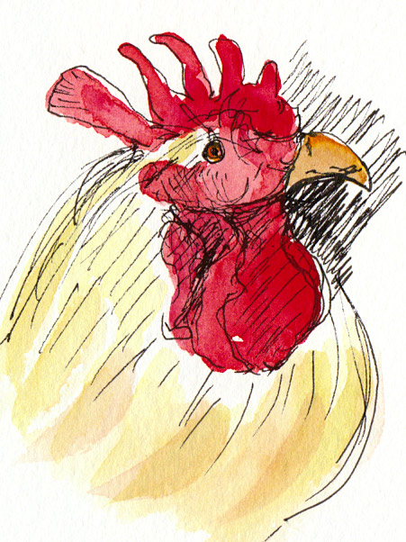 Proud Rooster, ink & watercolor in Moleskine 5x7