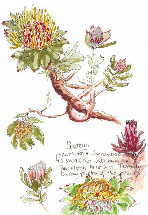 Proteus in Bloom, ink & gouache, Moleskine 5x7 sketchbook