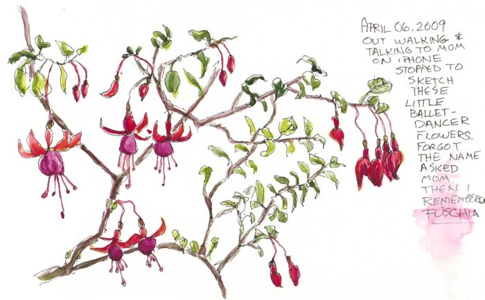 "Fuschias, Ink & watercolor, 5x7"" in Moleskine"