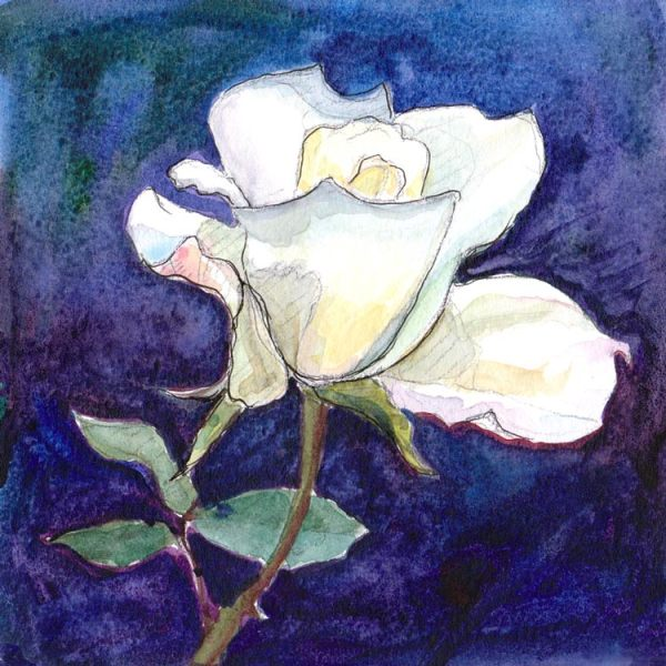 White Rose #1, ink & watercolor 5x5""
