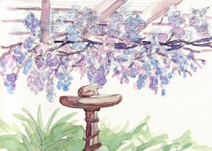 """Cathy's Wisteria, watercolor, 5.5x6"""""""