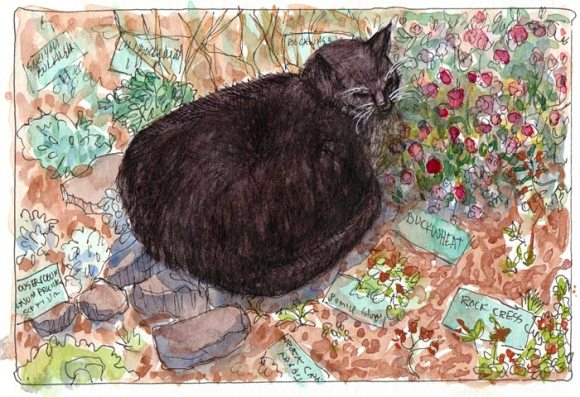 Cat Napping in the Buckwheat, rev2, Ink and watercolor