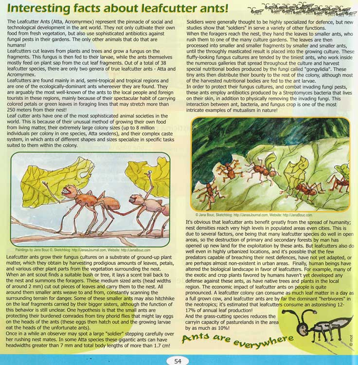 """Leafcutter Ants, in """"Zoom"""" (Costa Rica magazine)"""
