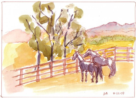 Rush Ranch Horses, Sepia Copic Multiliner and watercolor wash