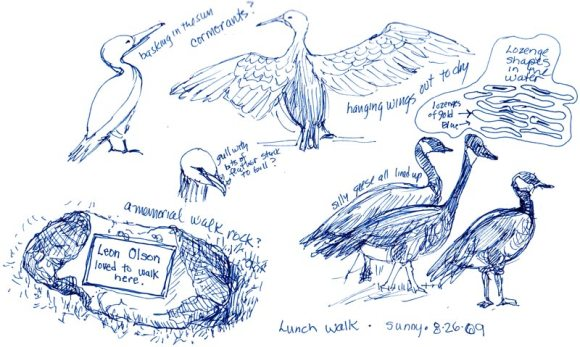 Lunchtime Sketching Lake Merritt Birds