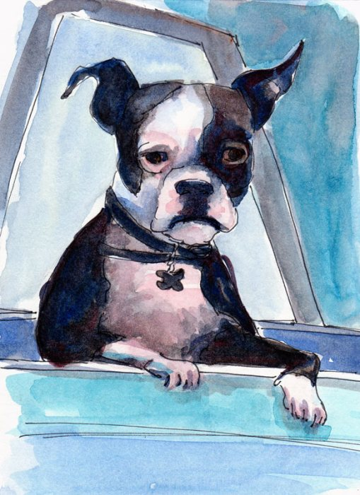 Cool Boston Terrier, Ink & watercolor