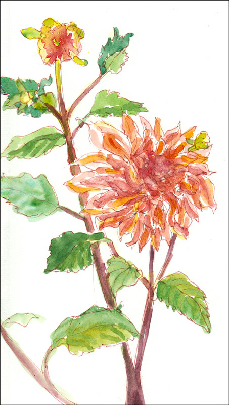 Alejandro's Dahlias, ink & watercolor
