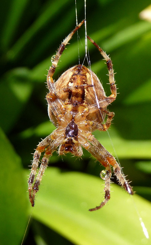 Big Hefty Spider. Should I be scared?