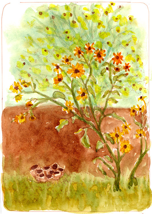 Sunflowers by Tin Roof Yoga, ink & watercolor