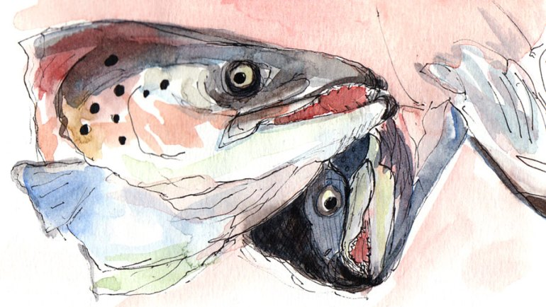 Salmon Heads, Ink and watercolor