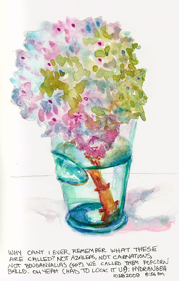 Hydrangea in Cow Glass #1, graphite and watercolor