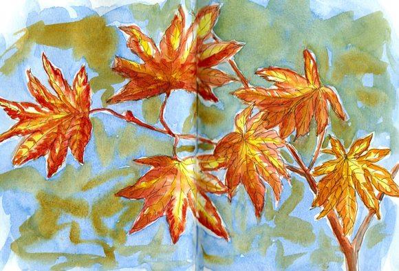Japanese Maple leaves, ink & watercolor