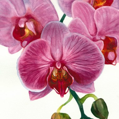"Orchid painting #1 in watercolor, 8.5"" x 11.5"""