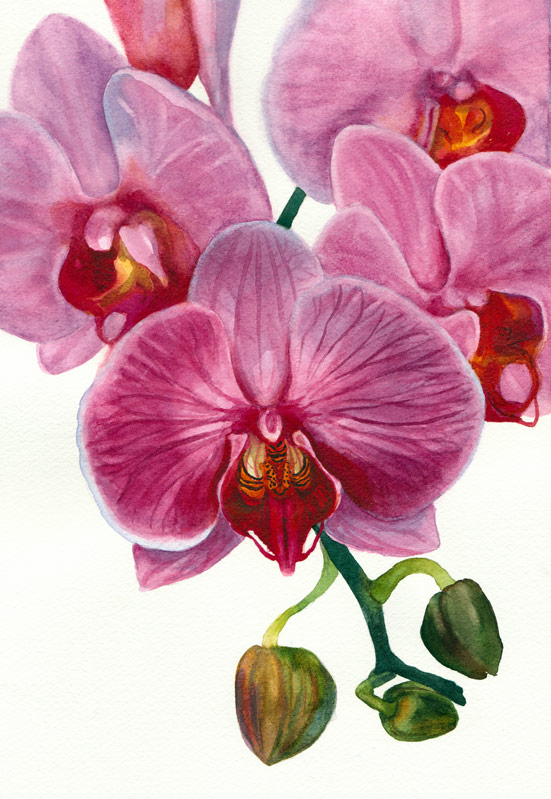 "Orchid painting in watercolor, 8.5"" x 11.5"""