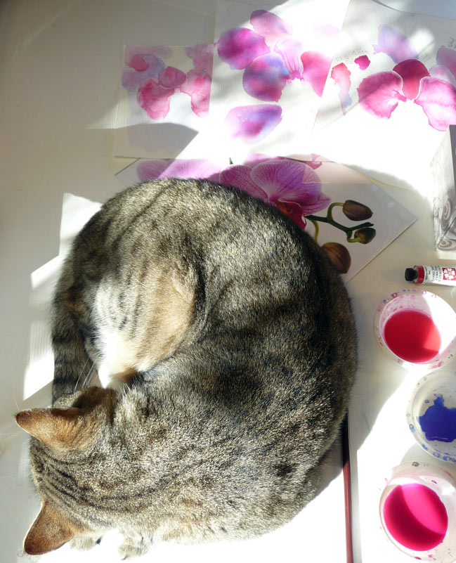 Busby relaxing amidst orchid chaos