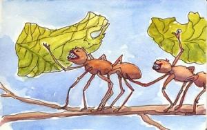 ants3-web - Copy