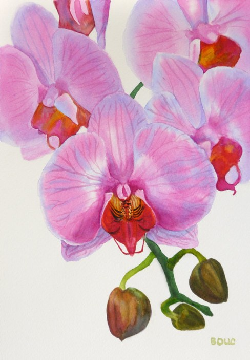 Orchid in watercolor #2, 12x9""