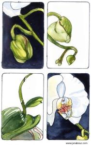 orchid - Copy