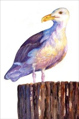 seagull-color
