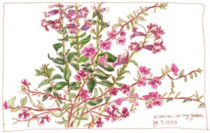 wildflowers-web