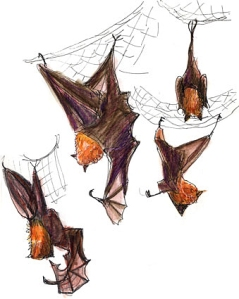 zoo-bats-web