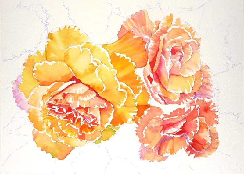 Becoming begonias third painting for the book jana - High resolution watercolor flowers ...