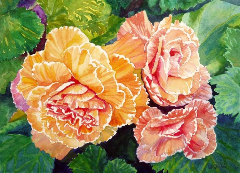 Becoming Begonias, Watercolor, 9x12""
