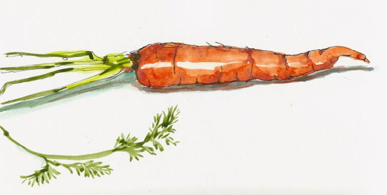 Carrot, ink & watercolor