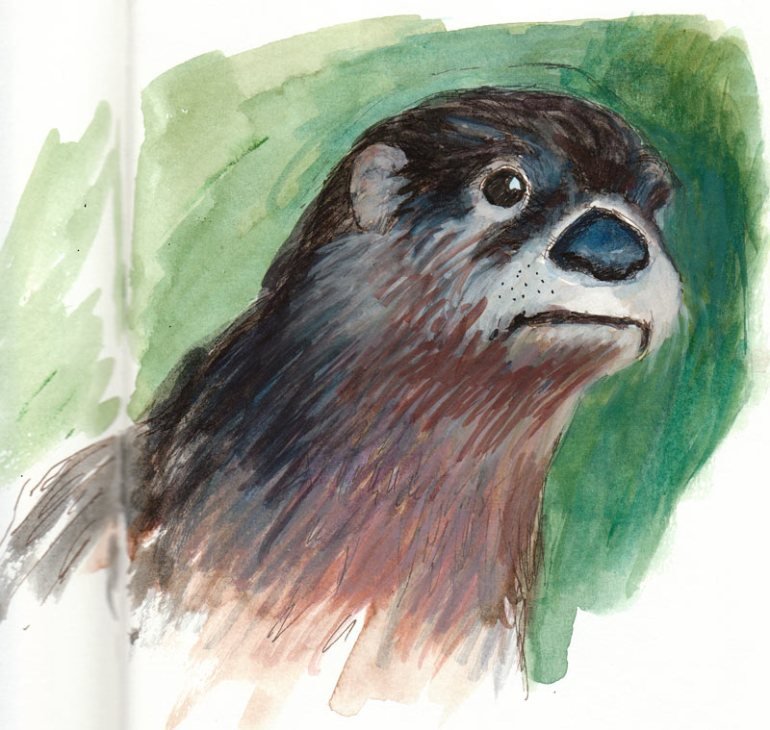Otter, Gouache and Ink