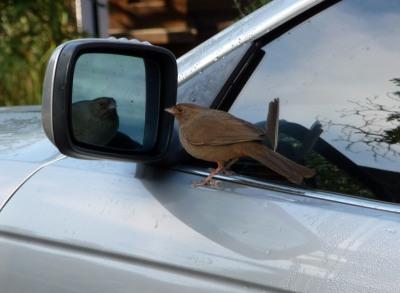 OCD Bird