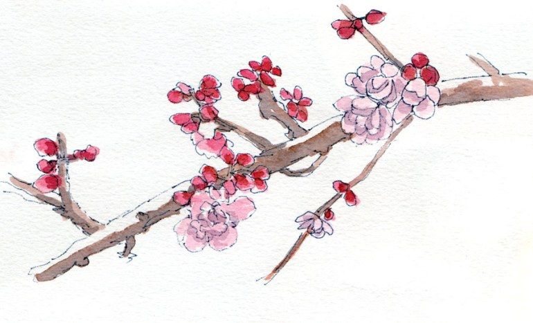 Blossoms, blue ink & watercolor