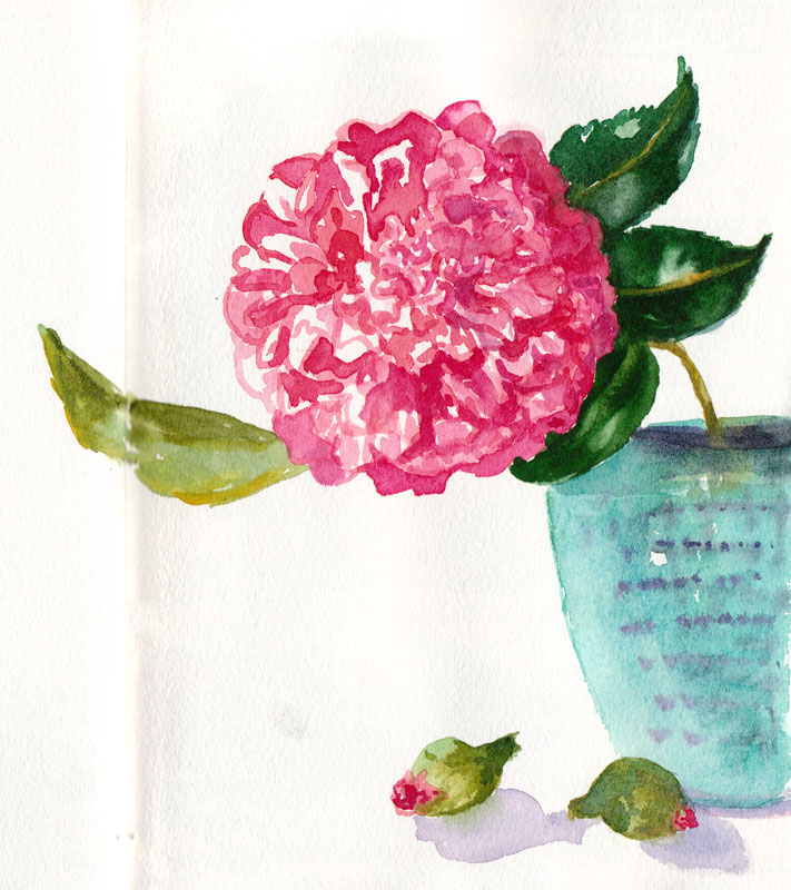 First Camellia of Spring; watercolor, painted directly without drawing first