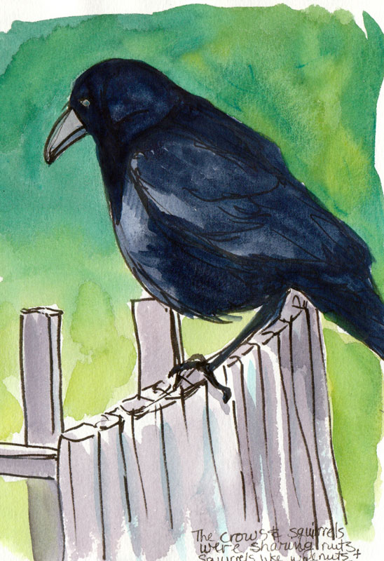 Crow on the fence, ink & gouache