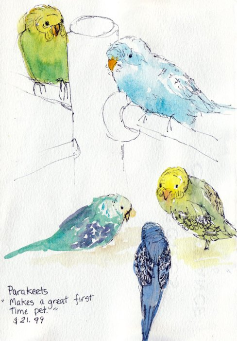 Parakeets at Petco, ink & watercolor