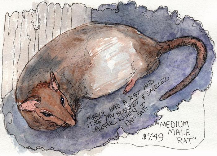 Medium Male Rat, ink & watercolor