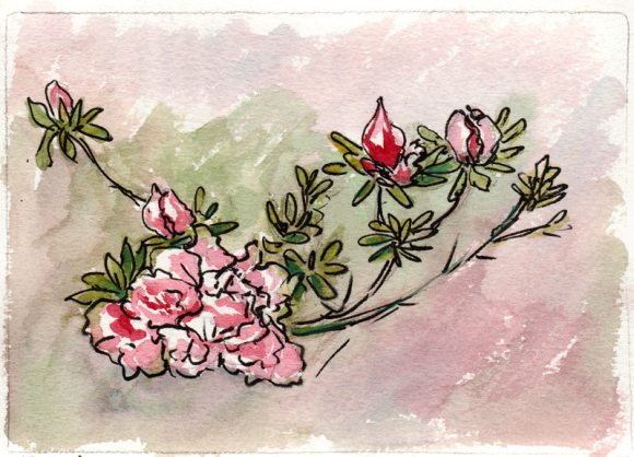 Front yard flowers, ink & watercolor