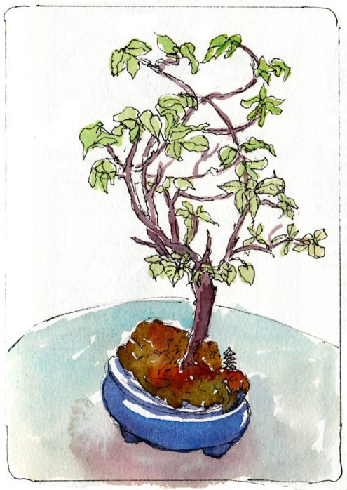 Cathy's Bonsai, ink & watercolor