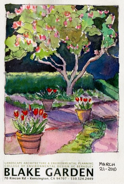 Blake Gardens Tulips & Tulip Tree, ink & watercolor, 7x5""